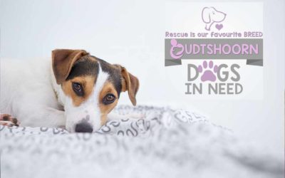 Oudtshoorn Dogs in Need